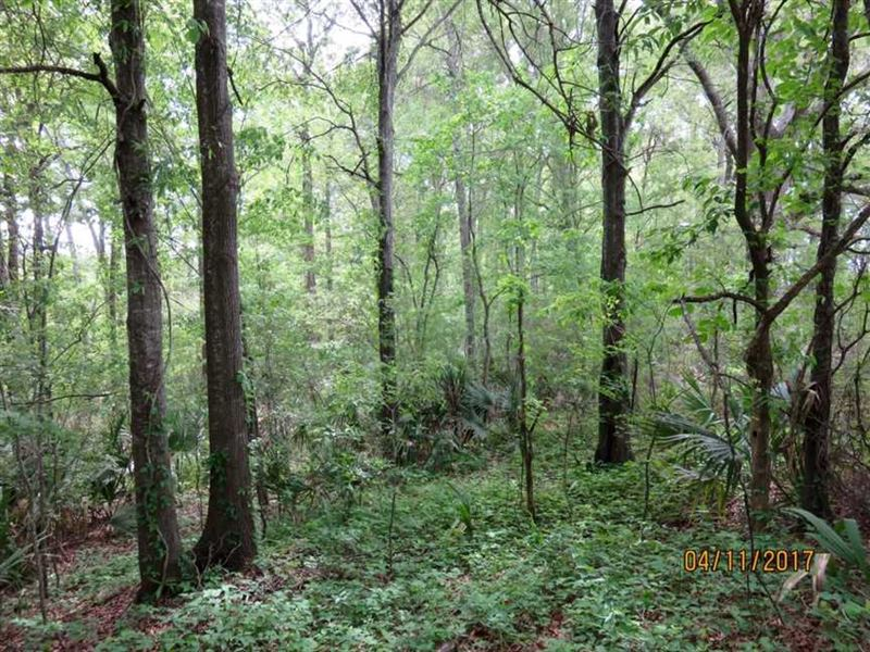 25 Ac. of Great Deer & Duck Hu : Saint Joseph : Tensas Parish : Louisiana