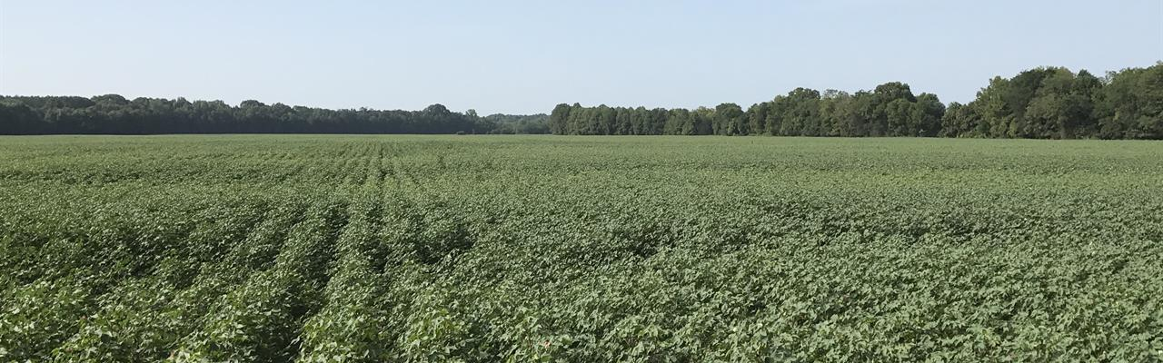 The Brookson Plantation, 6395 Acres : Macon : Noxubee County : Mississippi