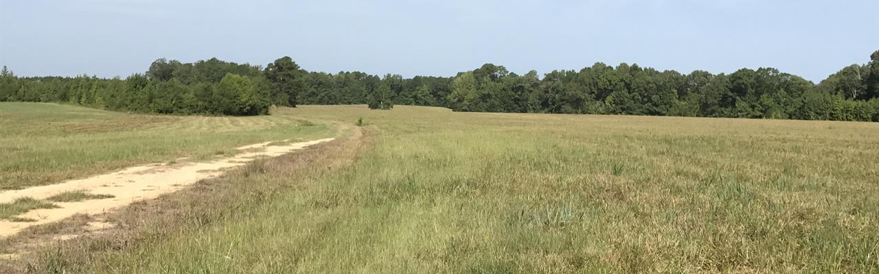 The Brookson Plantation, 2950 Acres : Macon : Noxubee County : Mississippi