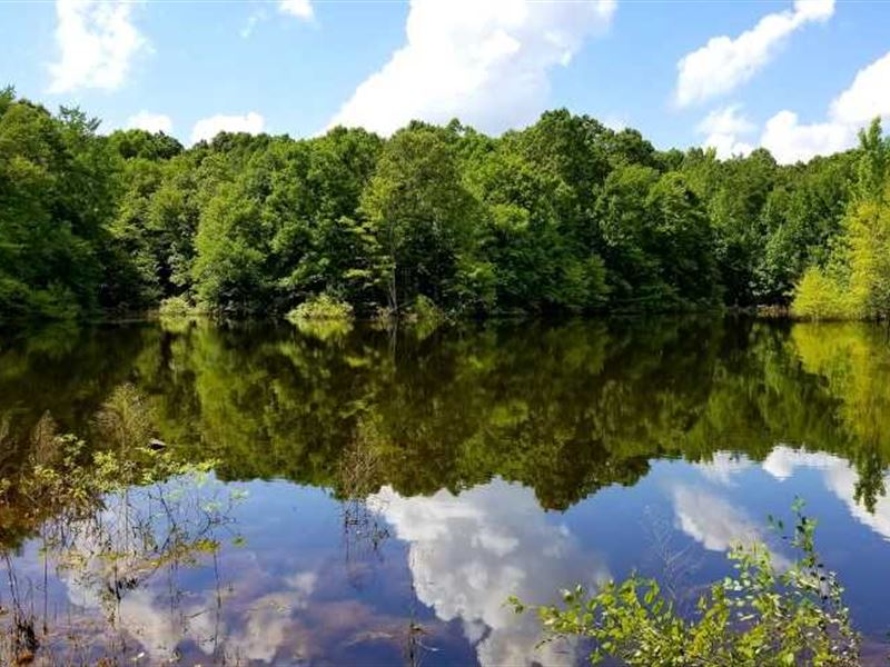 130 Acres +, 2 Lakes, Plenty Of : Selmer : McNairy County : Tennessee