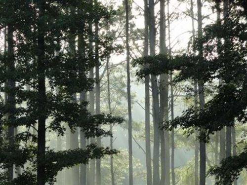 1025 Acres Sorghum Creek Legacy : Holladay : Benton County : Tennessee