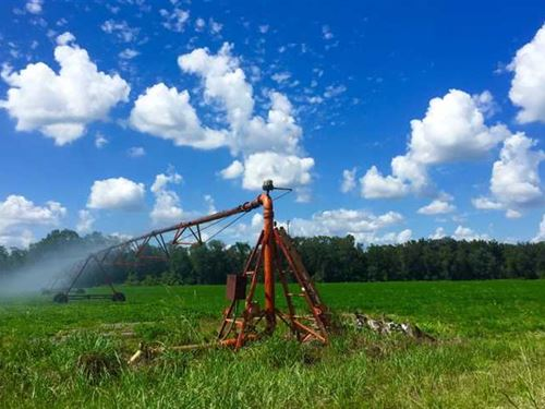 Irrigated Farmland With Great Hunt : Oglethorpe : Macon County : Georgia