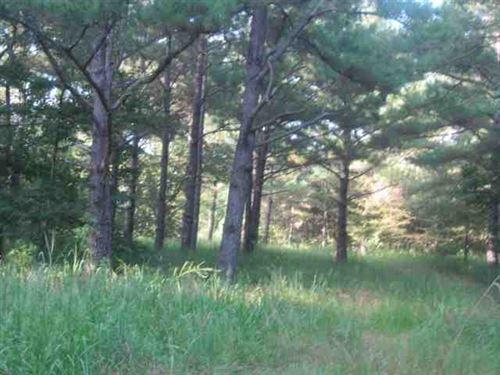 Timber/Hunting Land 1470 Acres : Eupora : Webster County : Mississippi