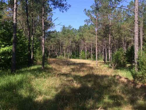 Land 90 Acres For Sale in Carrol : Black Hawk : Carroll County : Mississippi