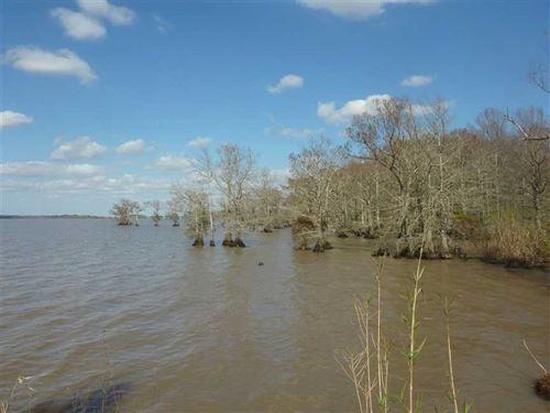 Lake Arthur Tract, Cameron Parish : Lake Arthur : Cameron Parish : Louisiana