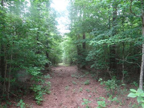Turkey Tracks on Dogwood Trail, We : Minden : Webster Parish : Louisiana