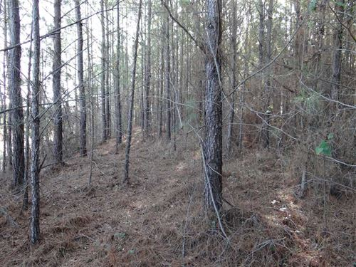 Old Homer Road Tract, Claiborne Pa : Haynesville : Claiborne Parish : Louisiana