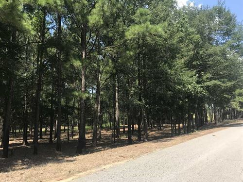 14 Acres Located in Gordo, Ala : Gordo : Pickens County : Alabama