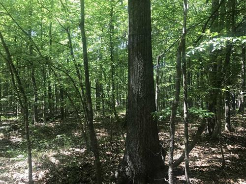 197 Acres Hunting/Recreational : Myrtlewood : Marengo County : Alabama