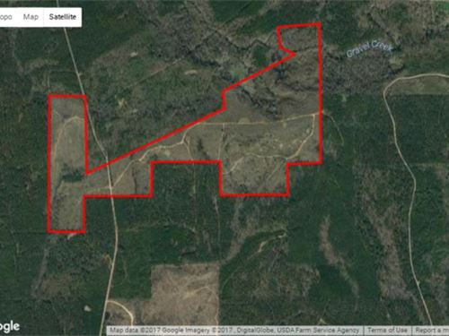 202 Acres Hunting Tract in Wil : Camden : Wilcox County : Alabama