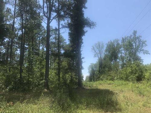 40 Acres in Jackson Co. Close to : Dutton : Jackson County : Alabama