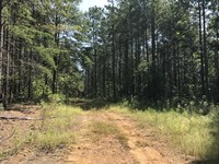 321 Acres on Pea Ridge Road, Fayet : Hubbertville : Fayette County : Alabama