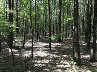 280 Acres in Jackson Co. Close to : Dutton : Jackson County : Alabama