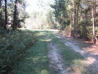 Wooded Waterfront Lot in Abbeville : Abbeville : Henry County : Alabama