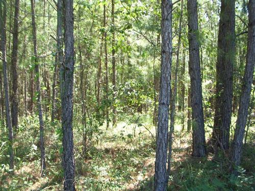 Heavily Wooded Residential Lot on : Eufaula : Barbour County : Alabama