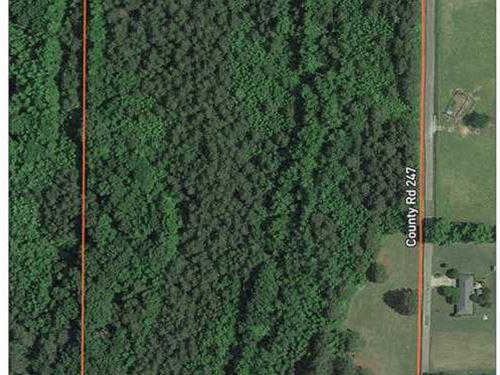 25 Acres on The Corner of CR 185 : Blue Springs : Lee County : Mississippi
