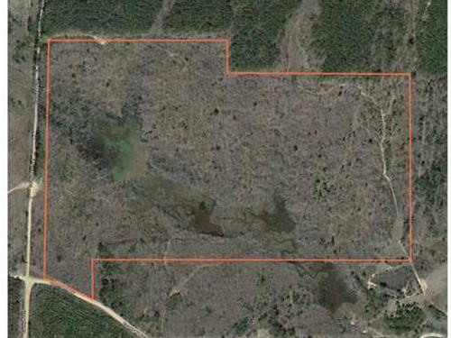 90.55 Acres Pittsboro, MS : Pittsboro : Calhoun County : Mississippi