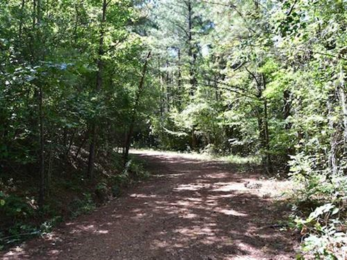 $1200 an Acre Timber Land For Sale : Ramer : McNairy County : Tennessee
