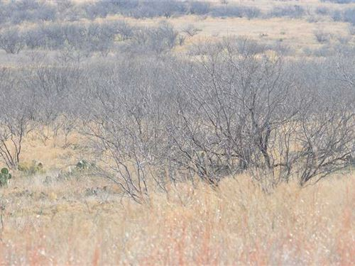 320 Acres, Pasture And Hunting Lan : Megargel : Archer County : Texas