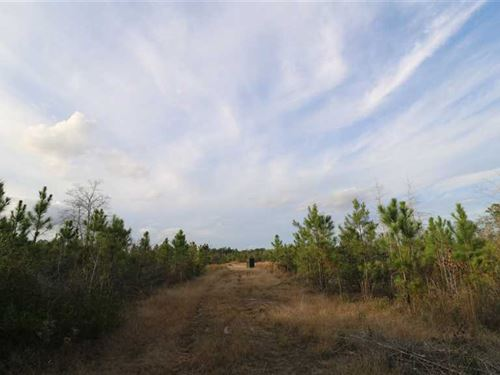 22 Acres Alexander Road, Lucedale : Lucedale : George County : Mississippi