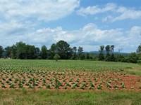 499 Acres in Yadkin County Sherri : Hamptonville : Yadkin County : North Carolina