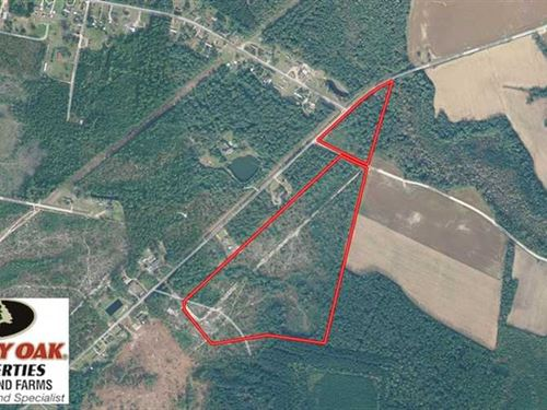 Reduced, 48 Acres of Hunting Land : Pleasant Hill : Dillon County : South Carolina