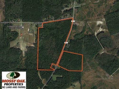 90 Acres of Timber And Hunting Lan : Whiteville : Columbus County : North Carolina