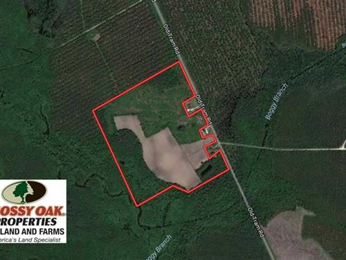 50.81 Acres of Hunting Land For Sa : Whiteville : Columbus County : North Carolina