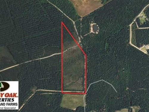 28 Acres of Hunting And Timber Lan : Beulaville : Duplin County : North Carolina