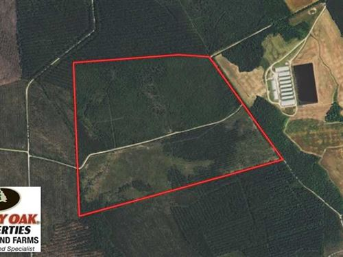 Under Contract, 204 Acres of Hunt : Beulaville : Duplin County : North Carolina