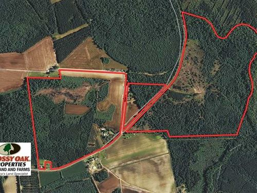 236 Acres of Farm And Timber Land : Lumberton : Robeson County : North Carolina