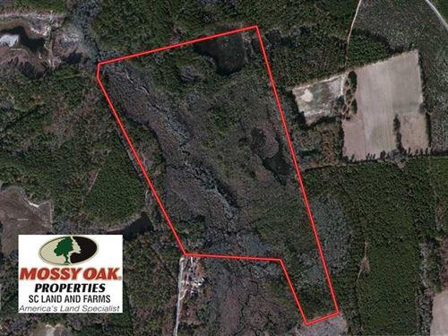 Under Contract, 99 Acres of Hunti : Bennettsville : Marlboro County : South Carolina