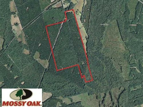 350 Acres of Hunting Land For Sale : Lodge : Colleton County : South Carolina