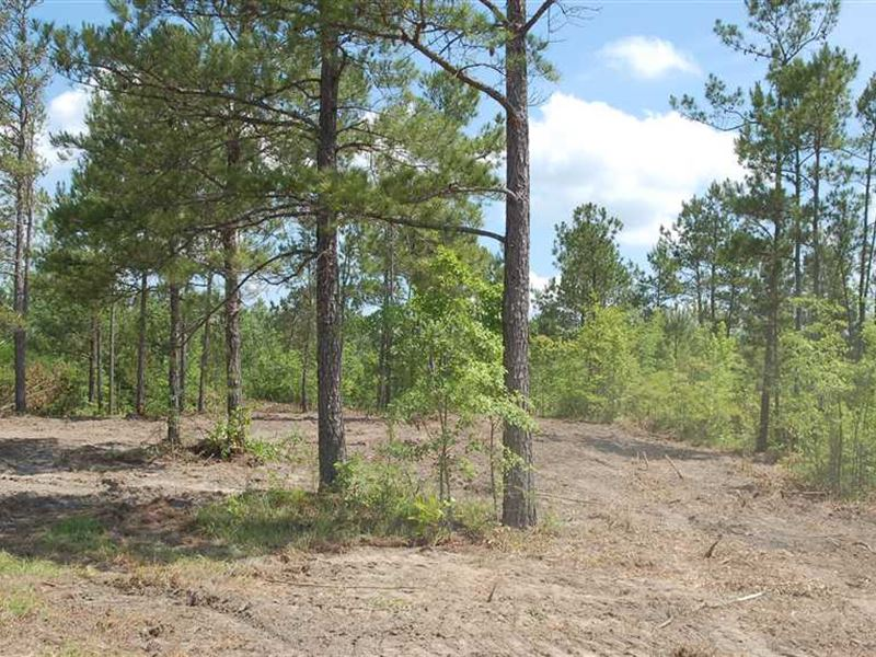 Perfect And Affordable Hunting in : Franklin : Macon County : Alabama