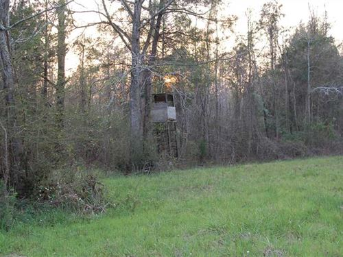 Unbelievable Hunting For Trophy De : Lapine : Crenshaw County : Alabama