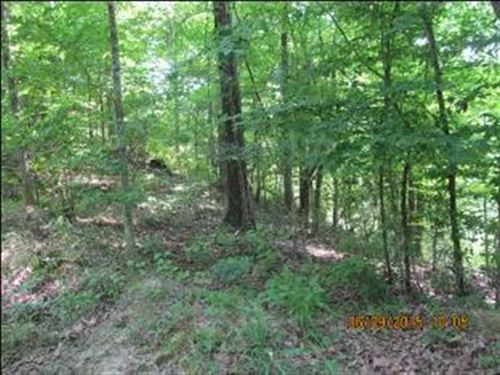 358 Acres of Hardwood Timber And : Utica : Hinds County : Mississippi
