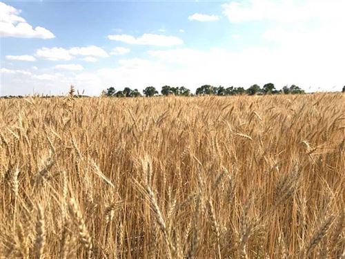 80 Acres of Tillable Farmland : Lyons : Rice County : Kansas