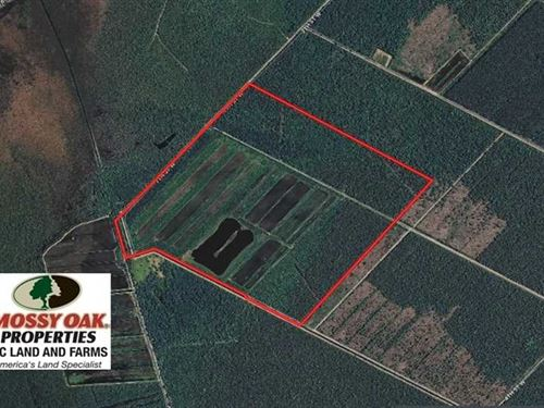 370 Acres of Prime Hunting And Far : Fairfield : Hyde County : North Carolina