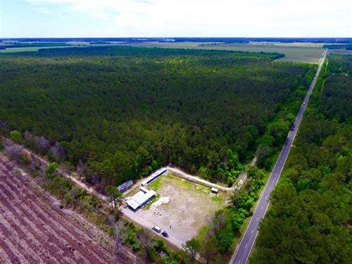 Reduced, 352 Acres of Timber And : Bayboro : Pamlico County : North Carolina
