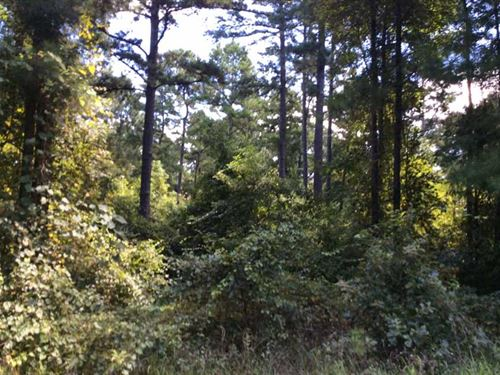 70 Acres Natural Woods, Rolling Hi : Sacul : Nacogdoches County : Texas