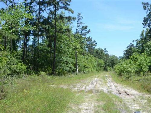 243 Acres Timber, Recreation Near : Zavalla : Angelina County : Texas
