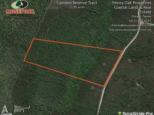 22 Acre Timberland For Sale in : White Oak : Camden County : Georgia