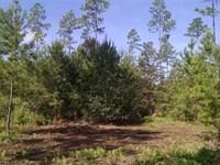 22+ Acres of Land For Sale Camden : White Oak : Camden County : Georgia