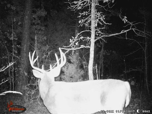 Timber, Pasture, Deer, Turkey, And : Searcy : White County : Arkansas