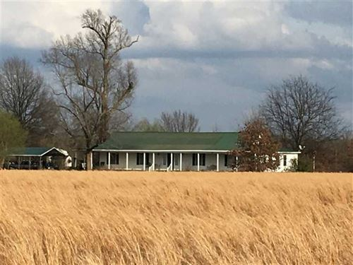 80 Pasture Ground With Wetland : Bald Knob : White County : Arkansas