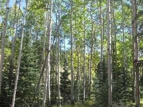 Colorado Woodland Estates : Florissant : Teller County : Colorado