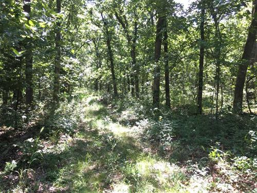 280 Acre Hunting Property In Ca : Montreal : Camden County : Missouri