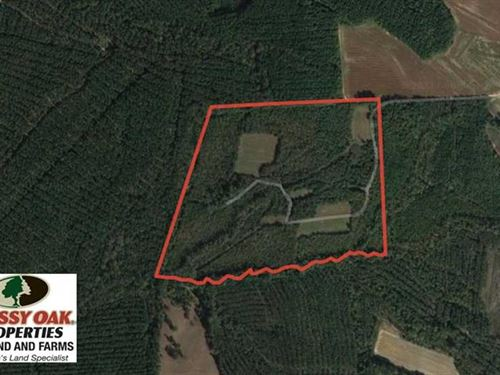 60 Acres of Farm And Timber Land : Halifax : North Carolina