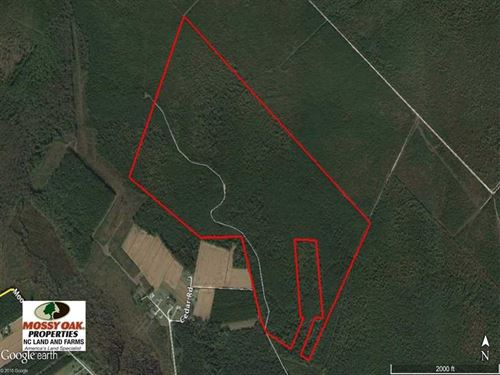 Reduced, 283.83 Acres of Hunting : New Bern : Pamlico County : North Carolina