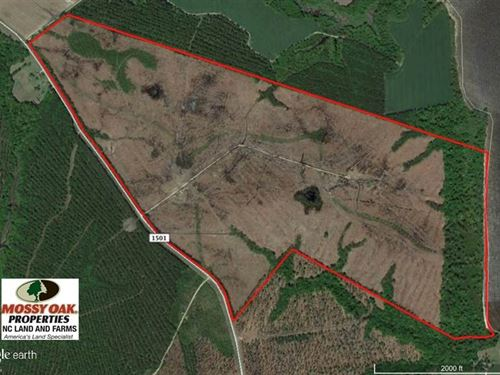 300 ac Riverfront Development Land : Merry Hill : Bertie County : North Carolina